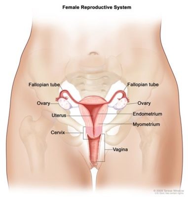How To Keep Your Uterus Healthy