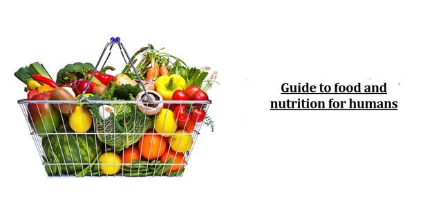 nutrition-food-for-humans